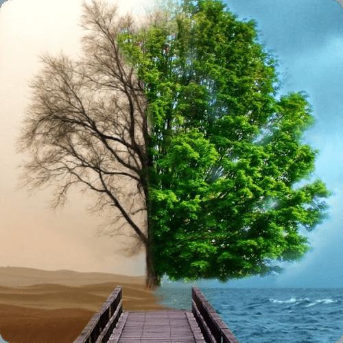 Carbon Offset | BOCS Civilizációtervezés Alapítvány